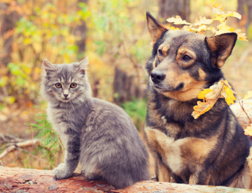 Fall Pet Care