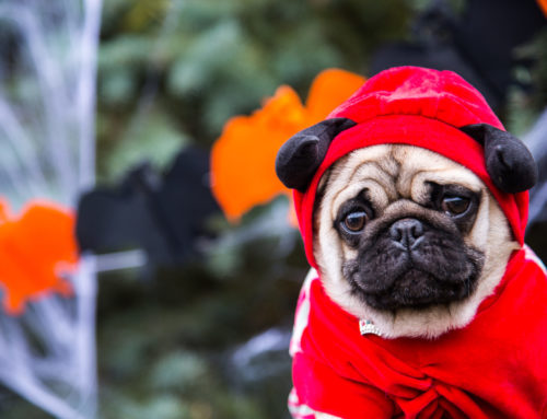 How to choose pet Halloween costumes that are fun, plus tips to keep your dog or cat safe and unafraid