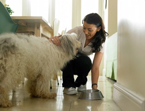Five Ways to Show Your Pet You Love Them