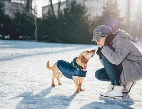 Keeping pets safe in cold weather