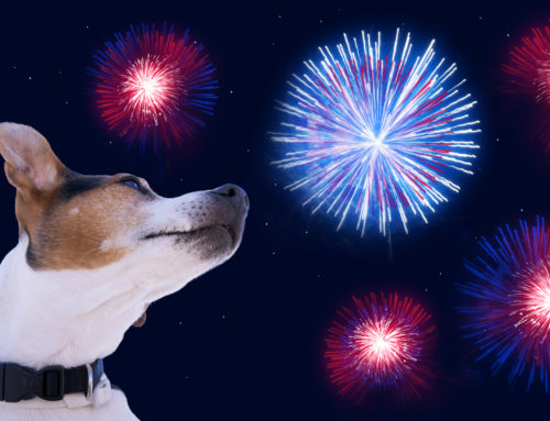Independence Day Can Be Perilous for Pets