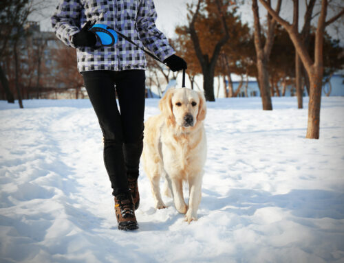 Why it's important to walk your dog often