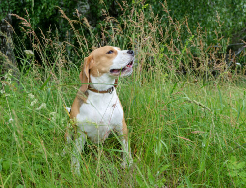 Warmer Weather Means Fleas & Ticks | some advice for your pet