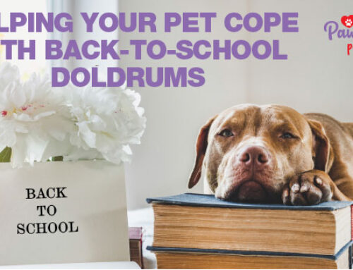 Tips for Helping Pets Copewith Back-to-School